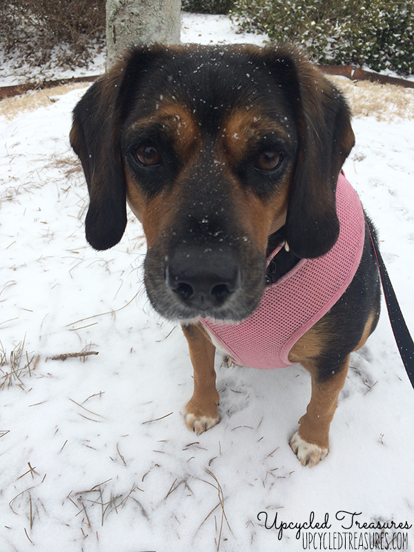 bailey-snowmageddon-2014-atlanta-upcycledtreasures