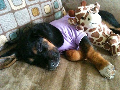 bailey-puppy