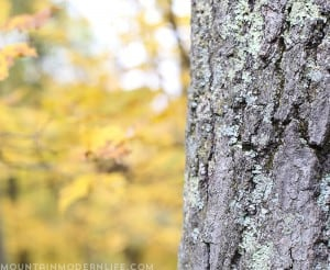 fall-colors-hike-wisconsin-mountainmodernlife-com
