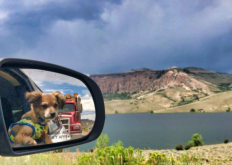 We're now traveling in our RV with two cats and a recently adopted rescue pup, McNally, who we named after the Rand McNally maps. MountainModernLife.com