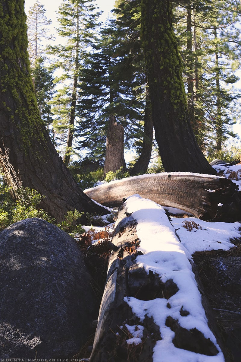 Come see why we've decided to make Christmas tree hunting in the National Forest our new holiday tradition! MountainModernLife.com