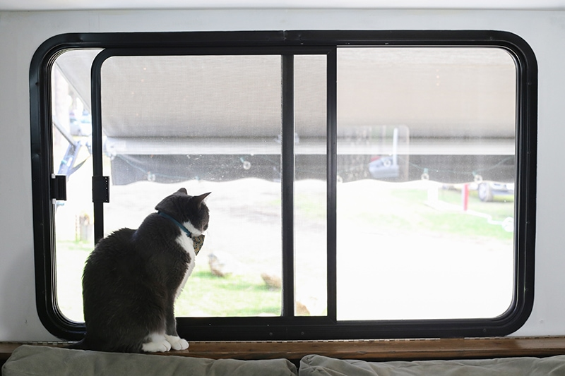 Come see how easy it is to frame RV windows to create a cozier vibe inside your tiny home on wheels! MountainModernLife.com
