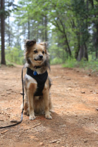 RV Pet Checklist   MountainModernLife.com
