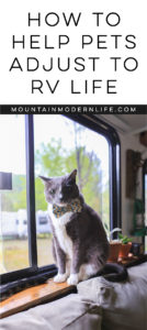 How to Help Pets Adjust to RV Life   MountainModernLife.com