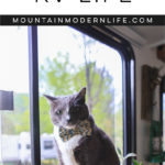 How to Help Pets Adjust to RV Life | MountainModernLife.com