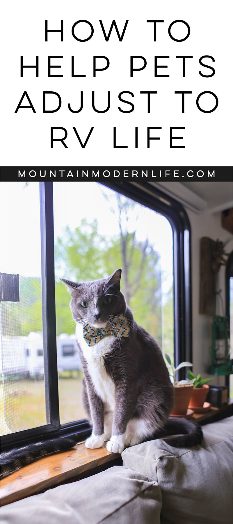 How to Help Pets Adjust to RV Life