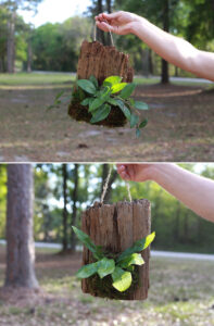 hanging wood planters on driftwood living wall art