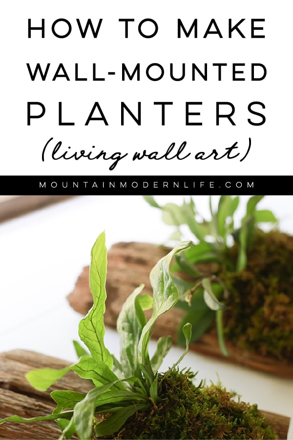 See how easy it is to make wall mounted plants on cork bark flats or driftwood! These are perfect for tiny living, purifying the air, or to keep out of reach from nibbling pets!