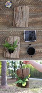 plant mounted onto driftwood slab