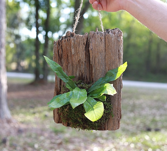 See how easy it is to make wall mounted plants on cork bark flats or driftwood! These are perfect for tiny living, purifying the air, or to keep out of reach from nibbling pets! MountainModernLife.com