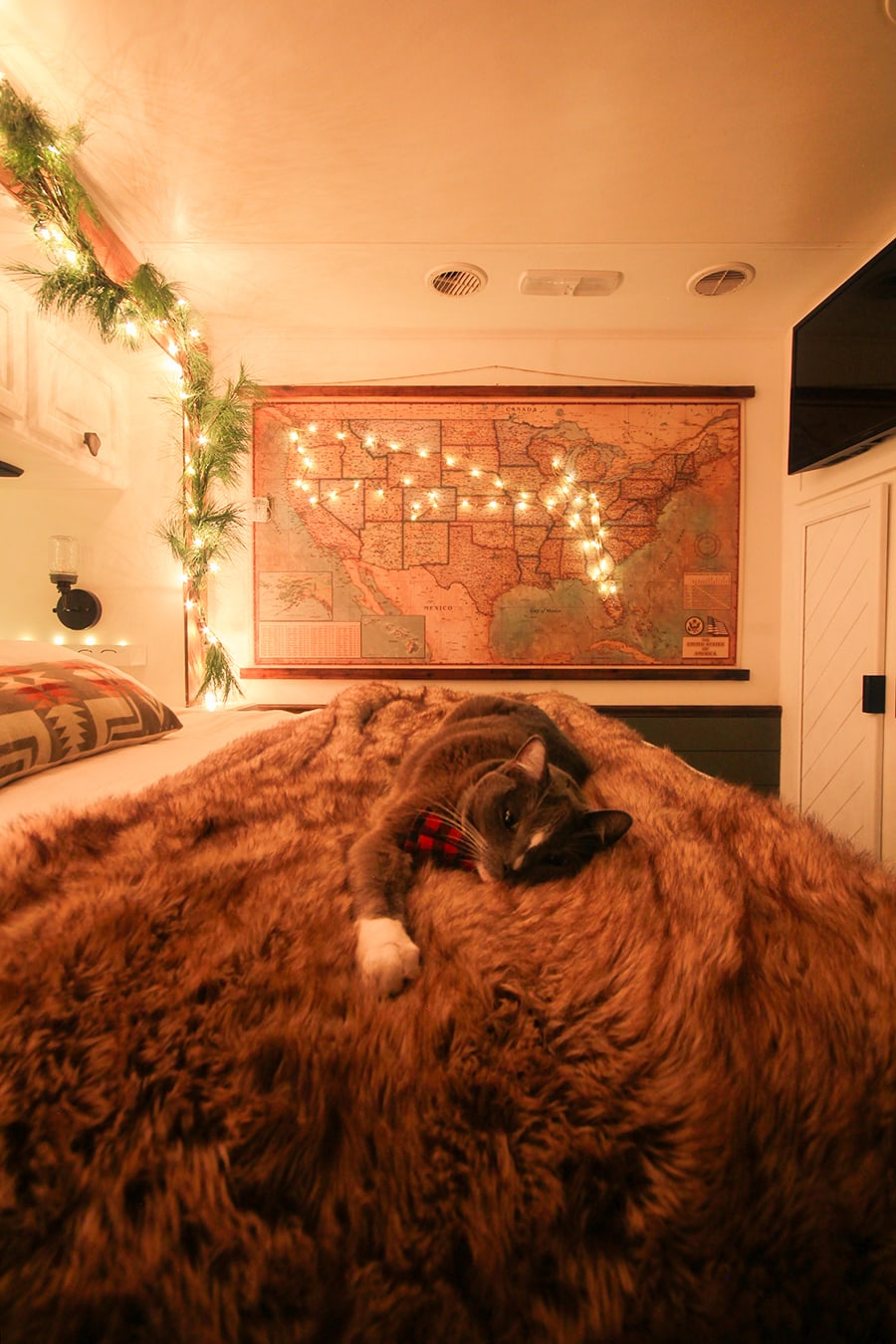 Christmas cat wearing bow tie in RV