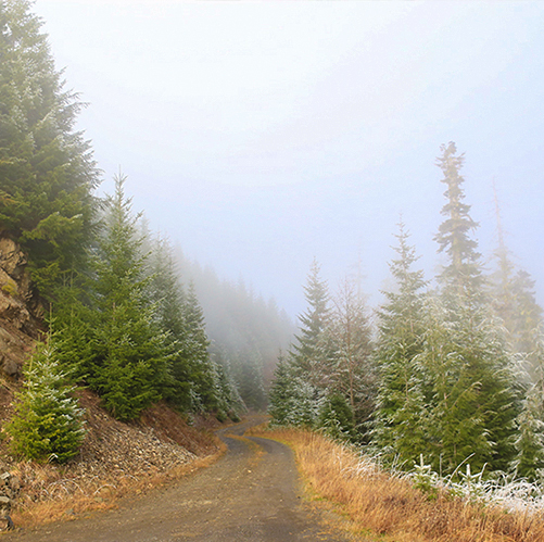 Christmas tree hunting in forest