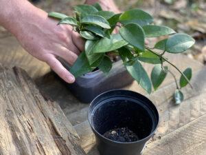 making cork bark flat planter