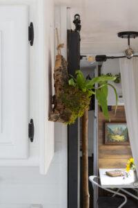 cork mounted planter with birdsnest