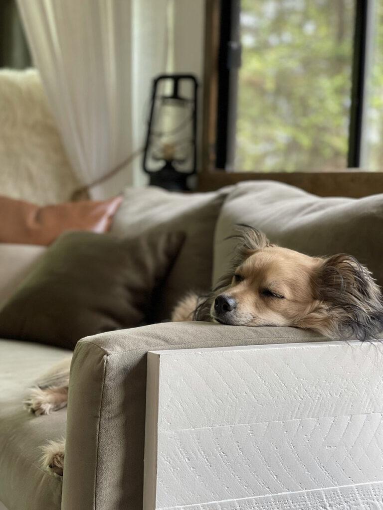 dog sleeping on RV sofa