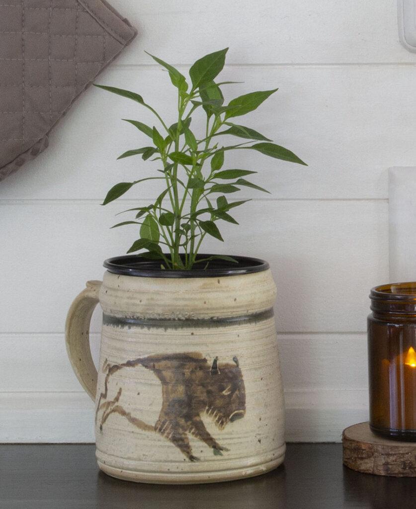 plant inside rustic pottery mug